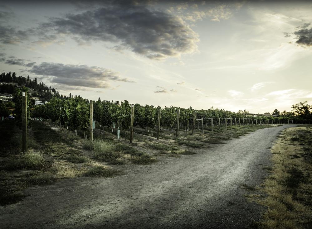 wine road.jpg