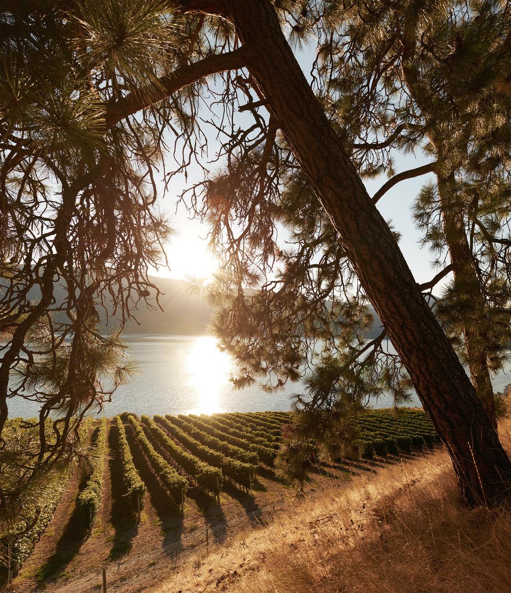 Winery Under a Tree web.jpg