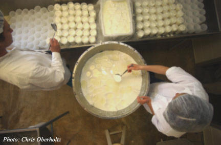 Ladling curd into French molds.