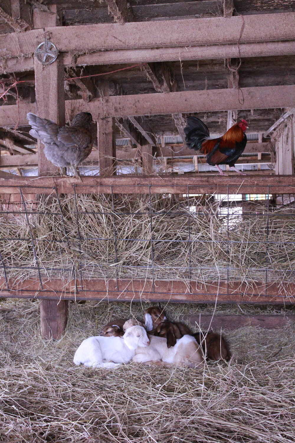 Kids snuggle up under the hay manger to stay warm.