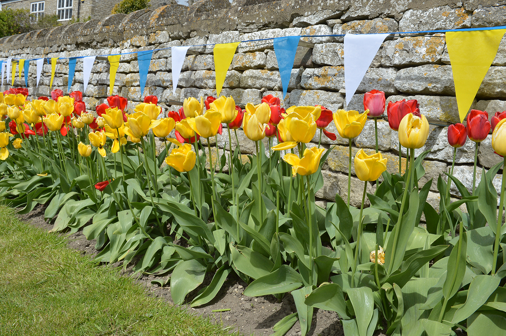 Next year the tulips will match the bunting...