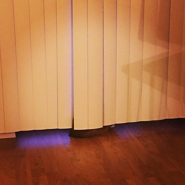 When George sits between the door and the blinds I laugh and laugh. Silly cat. He looks so funny from the outside. #guardcat #catsofinstagram #russianblue #cat #george