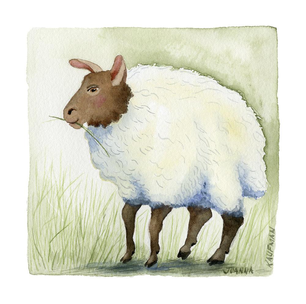 Woolly Wandering
