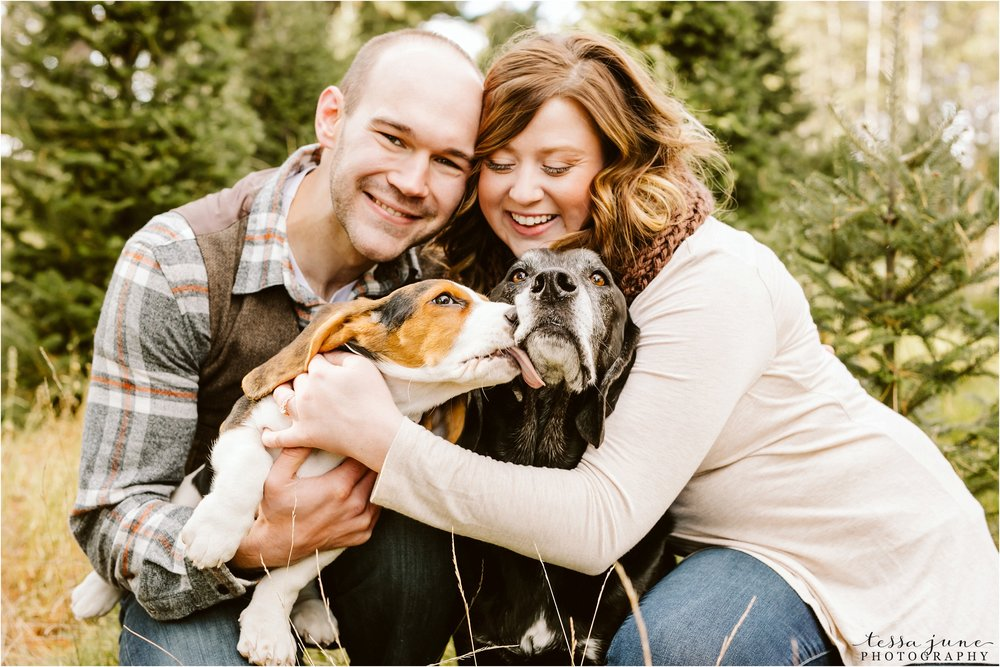 hansen-tree-farm-engagement-session-st-cloud-photographer-dogs