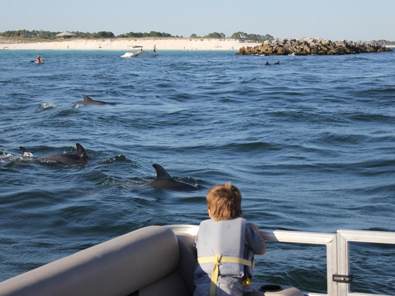 pontoon-boat-rentals-watching-dolphins.jpg