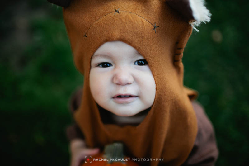 2014, baby bee, costume, ewok, family photographer, george lucas, halloween, los angeles, los angeles family photographer, Los Angeles portrait photographer, pumpkin, star wars, sweetsie pea, wicket, winifred, winze pea, yub nub, photo