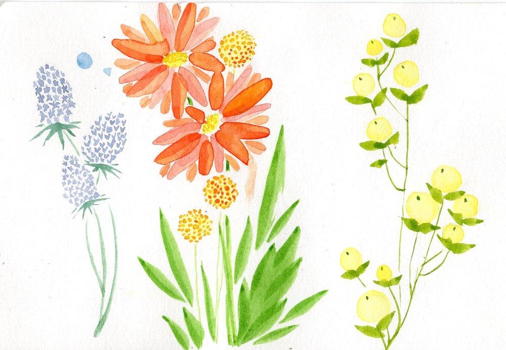 Plants002.jpg