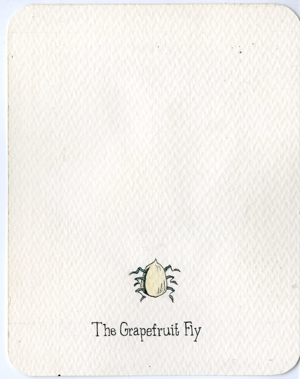 8. Grapefruit Fly.jpg