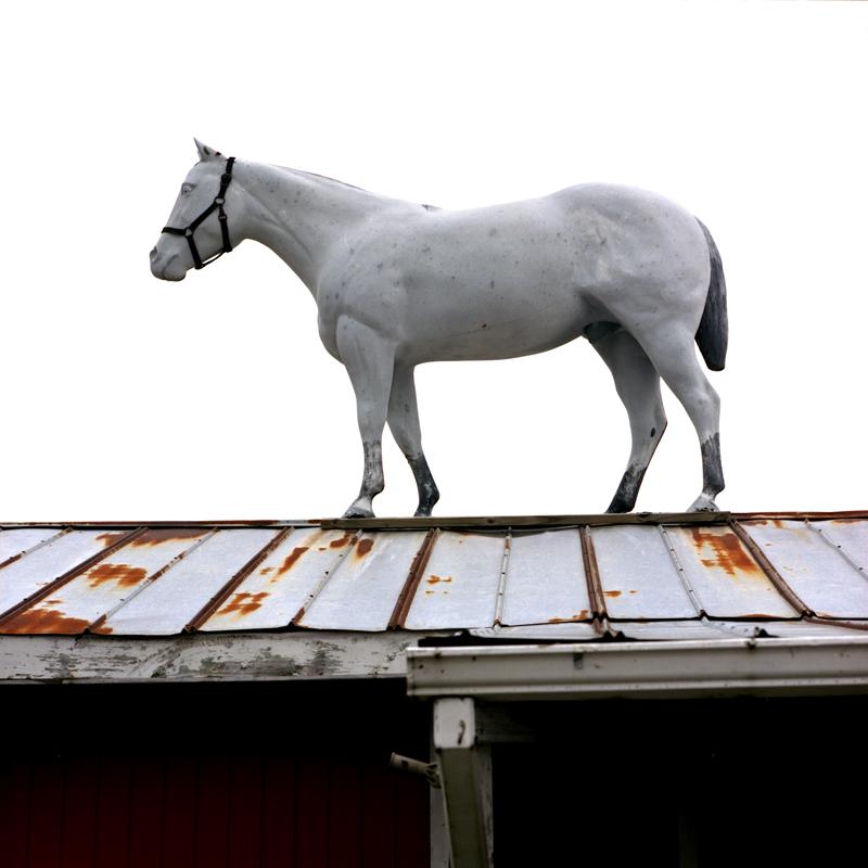 horseonroof.jpg