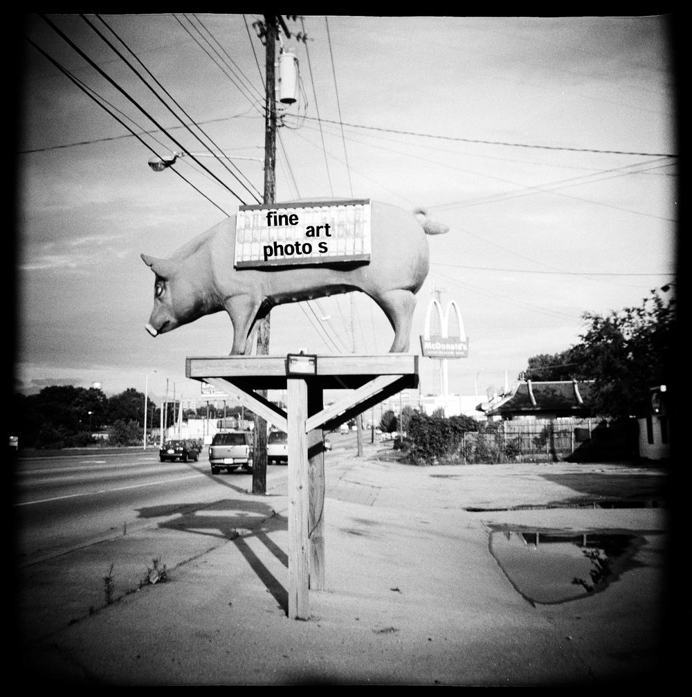 pig on platform.jpg