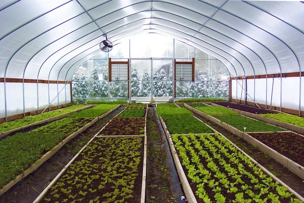 Greenhouse with snow-eax.jpg