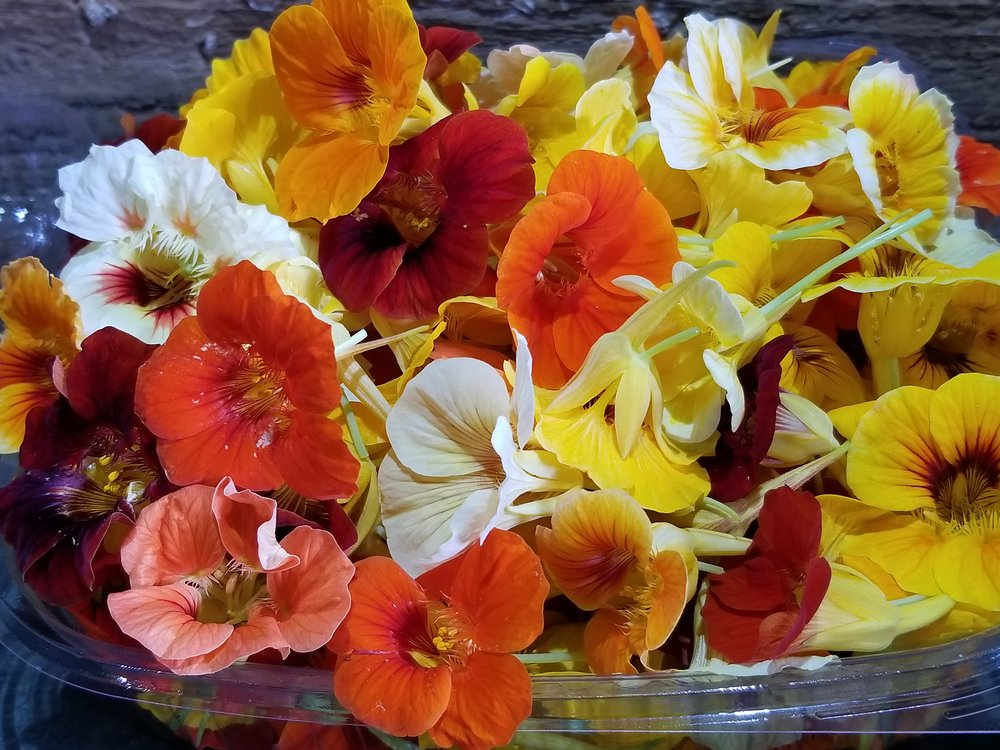 Edible Flowers - Nasturiums
