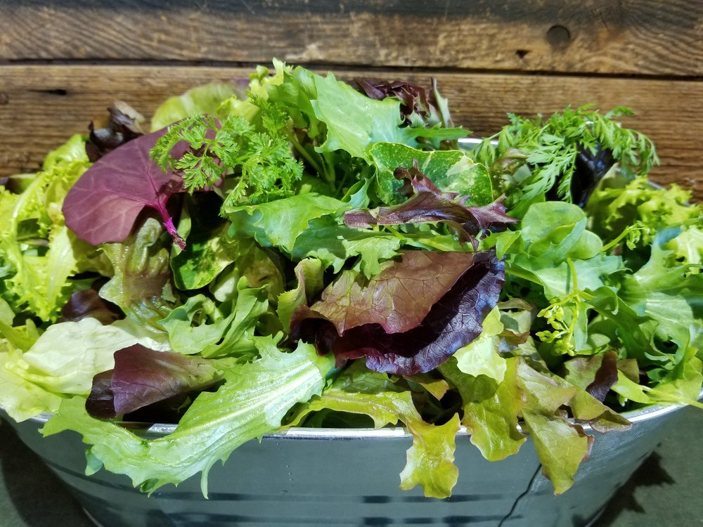 Wild Salad mix - Our Wild Salad Mix evolves with the seasons. We grow 50-70 varieties throughout the year concentrating on those that do best in any given season. This is one of our secrets for extending the season as well. We grow certain greens as our