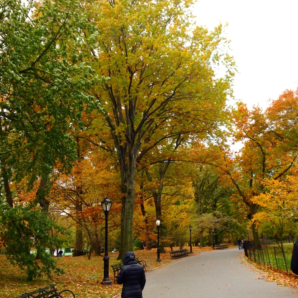 Walking through Central Park