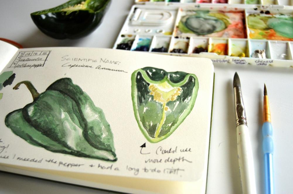 watercolor poblano pepper illustration