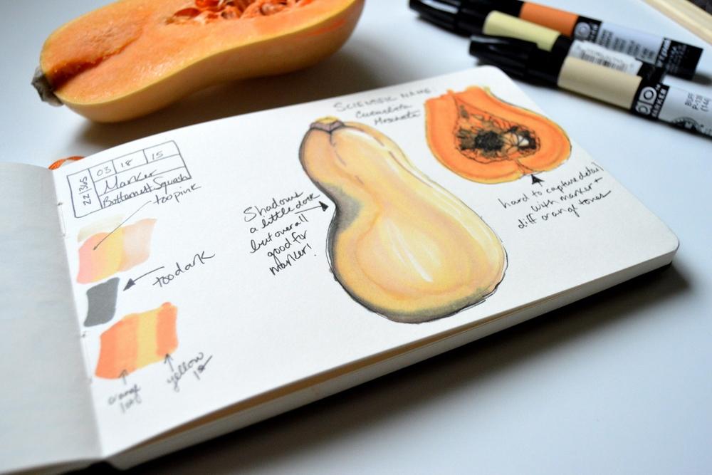 butternut squash marker illustration