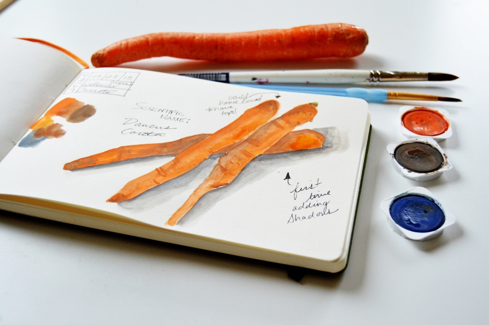 watercolor carrot illustration