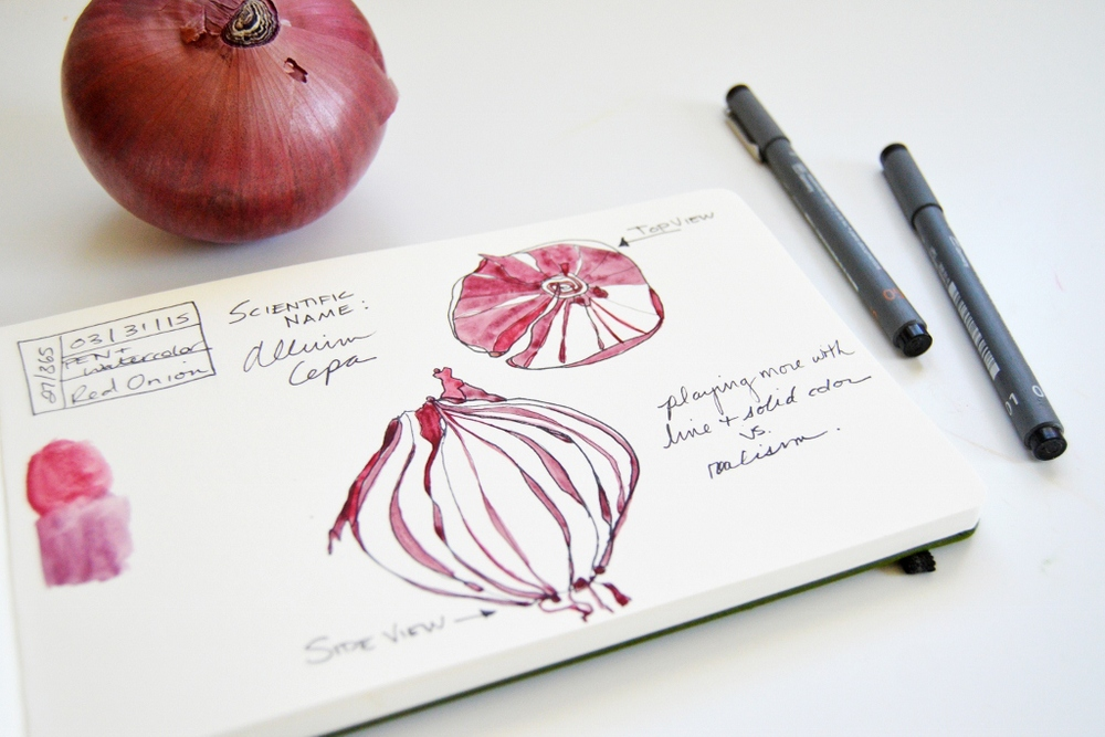 pen and watercolor onion illustration