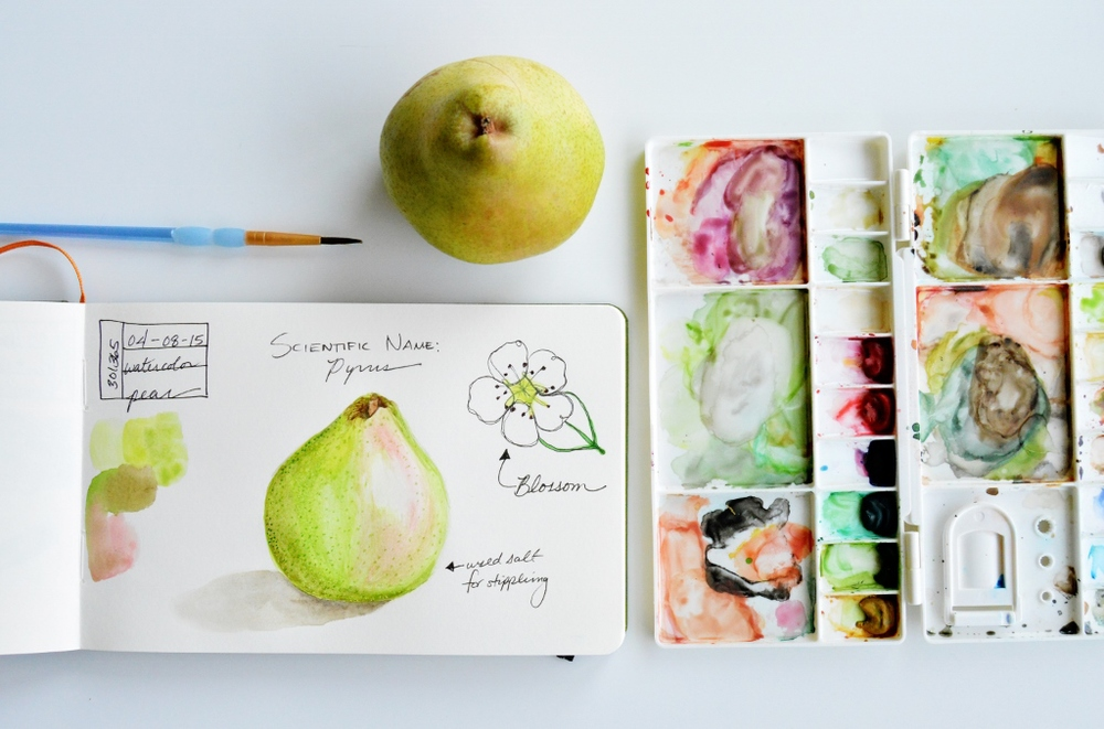 watercolor pear illustration