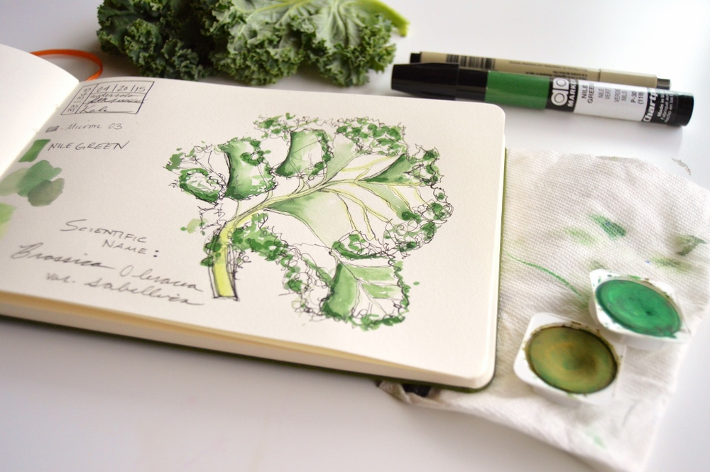 watercolor and pen kale illustration
