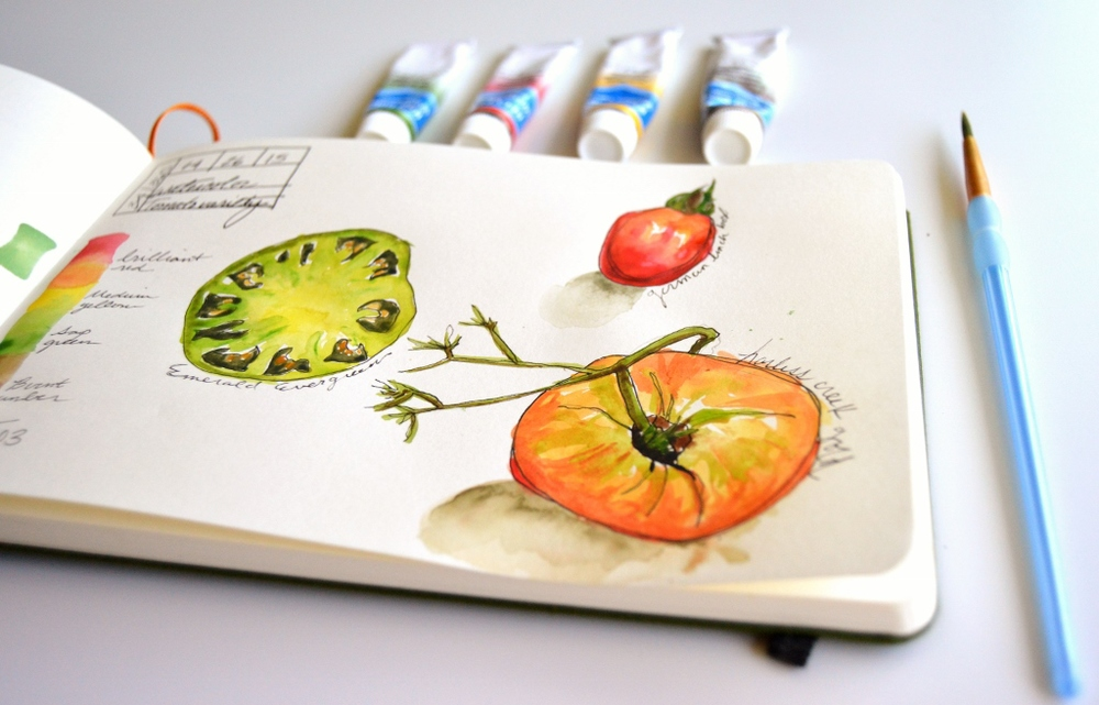 watercolor tomato illustration