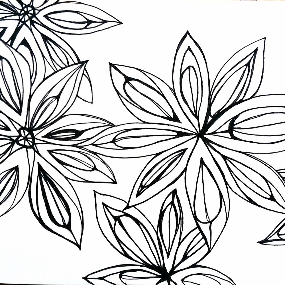 star anise pen illustration