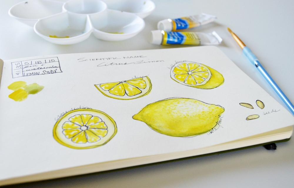 Watercolor Illustration | Lemon