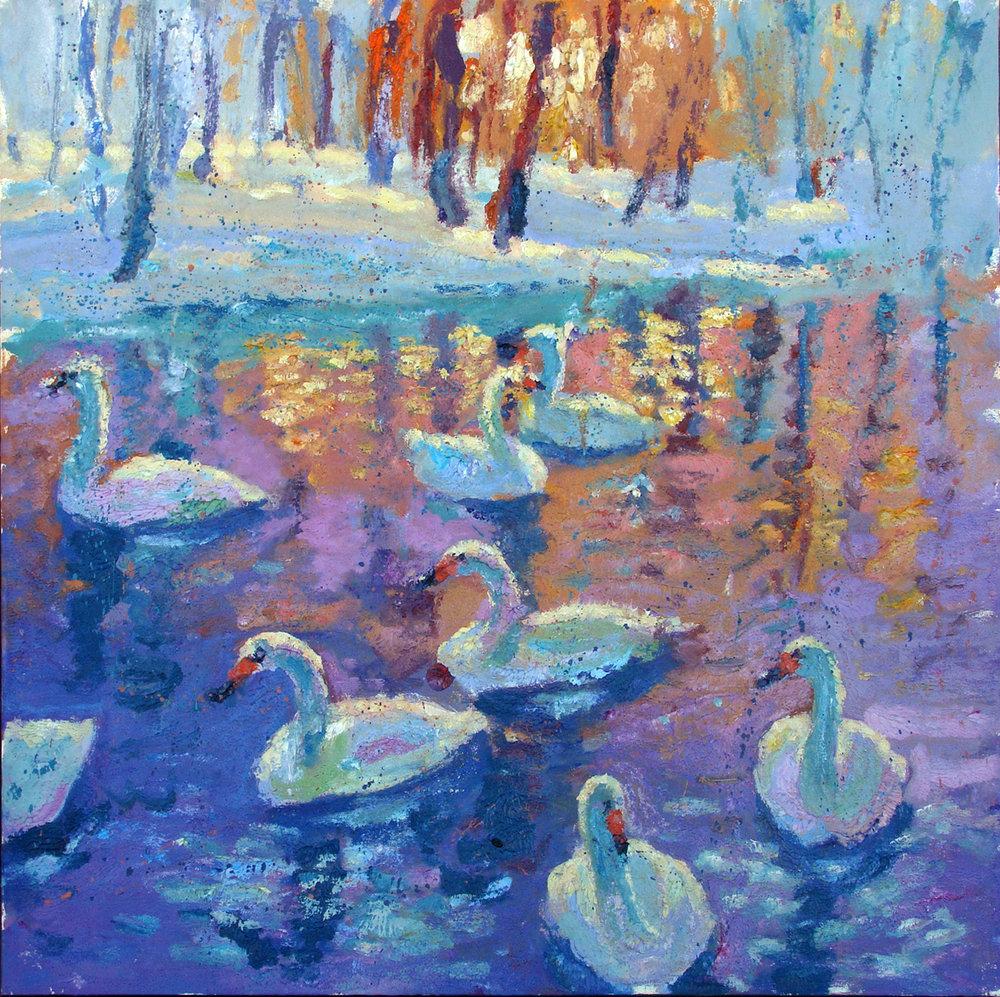 "Swans Sunset 40x40"""