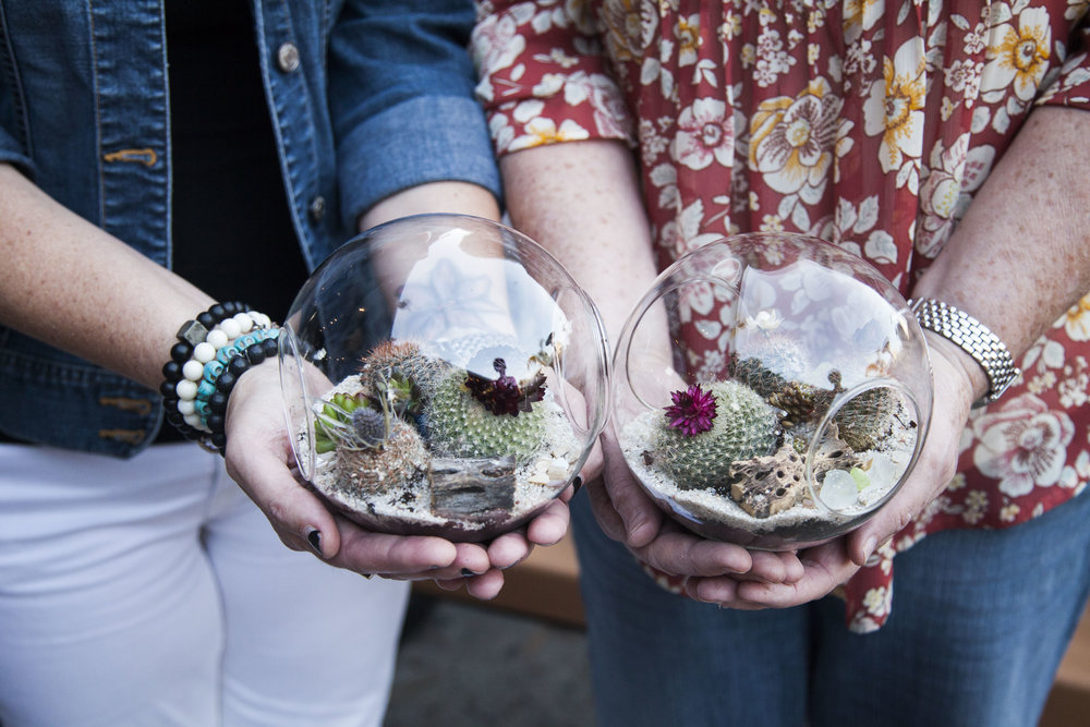 succulent-globe-friends.jpg