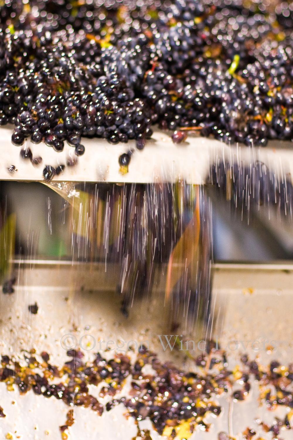 Oregon Wine Lovers02.jpg