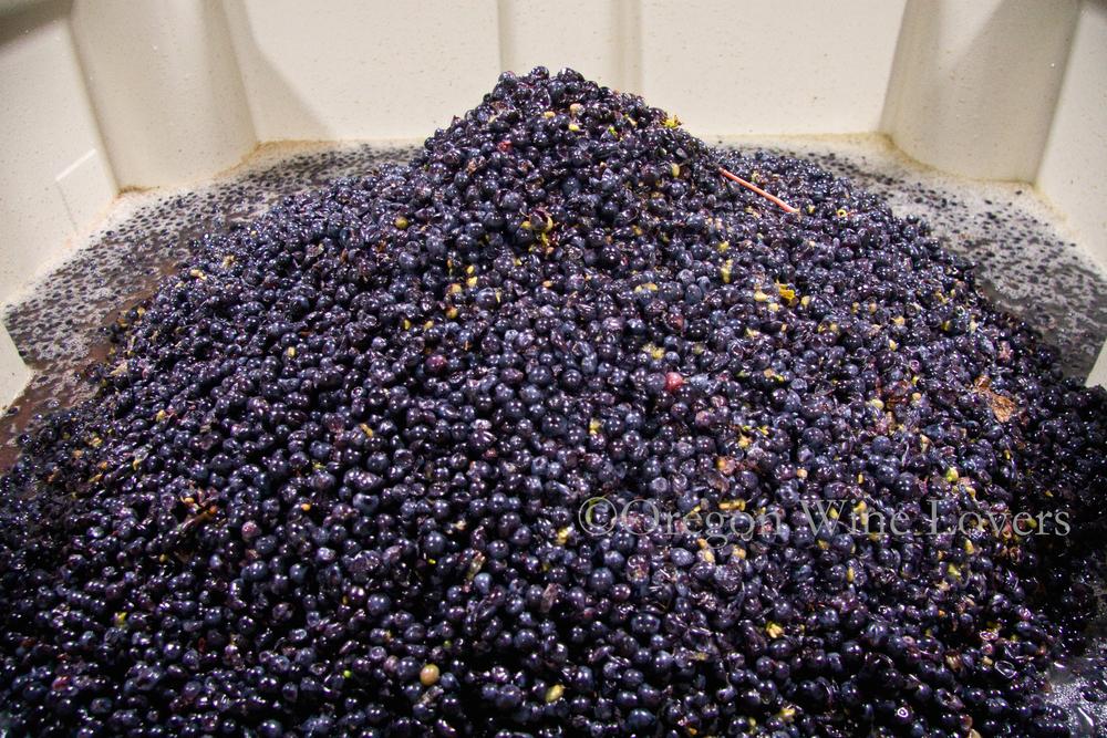 Oregon Wine Lovers03.jpg