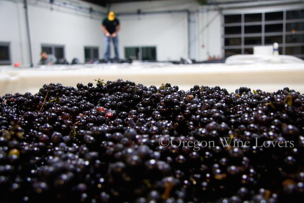 Oregon Wine Lovers04.jpg