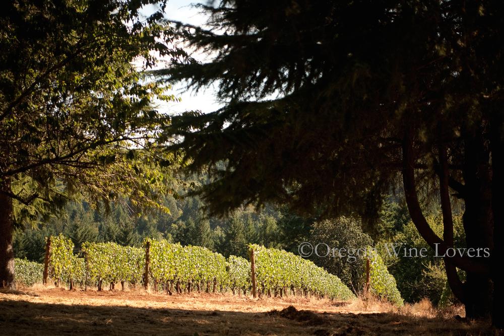 Oregon Wine Lovers07.jpg