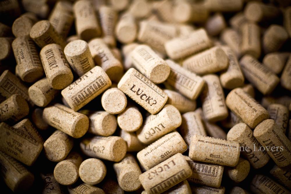 Oregon Wine Lovers14.jpg