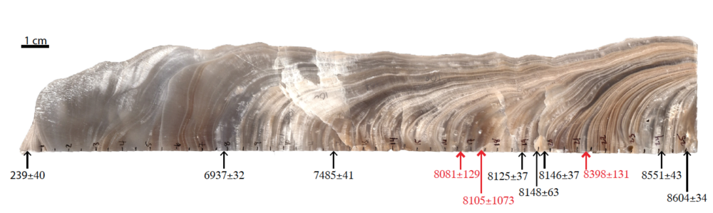 Image of quartered and polished stalagmite WMC1. Numbers show ages and associated errors for uranimum-series dates on the stalagmite. Red numbers had larger errors and were not used in the final age model for the stalagmite proxy records. Image: J. Oster.