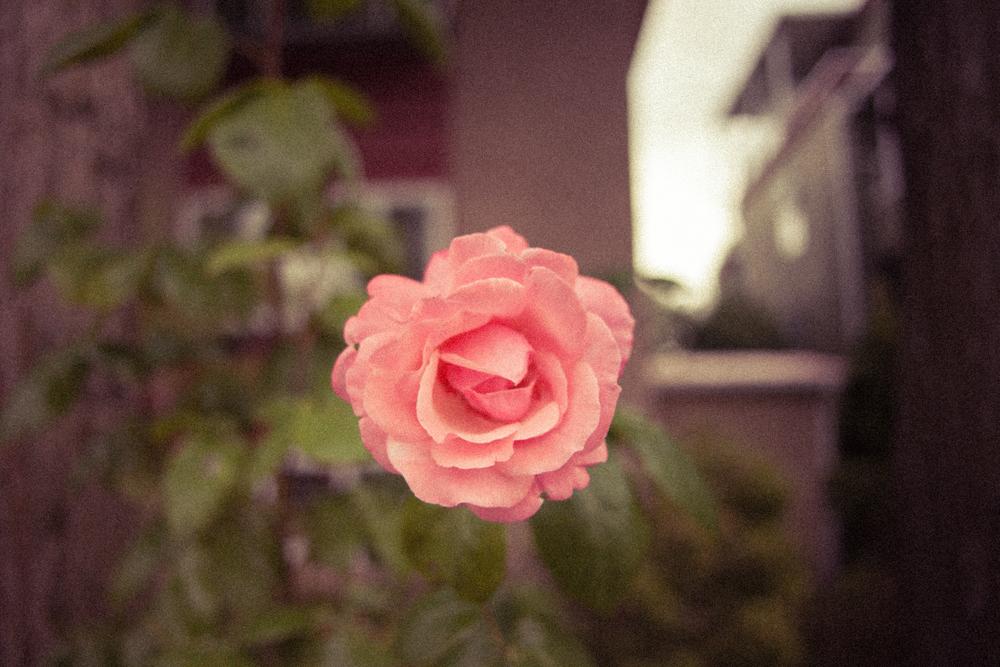 flowermemang-1.jpg