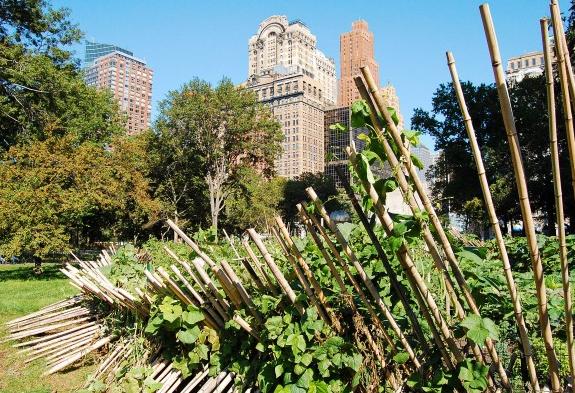 Battery Park Urban Farm