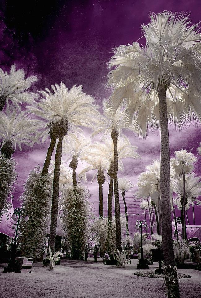 Infrared Coachella LAist