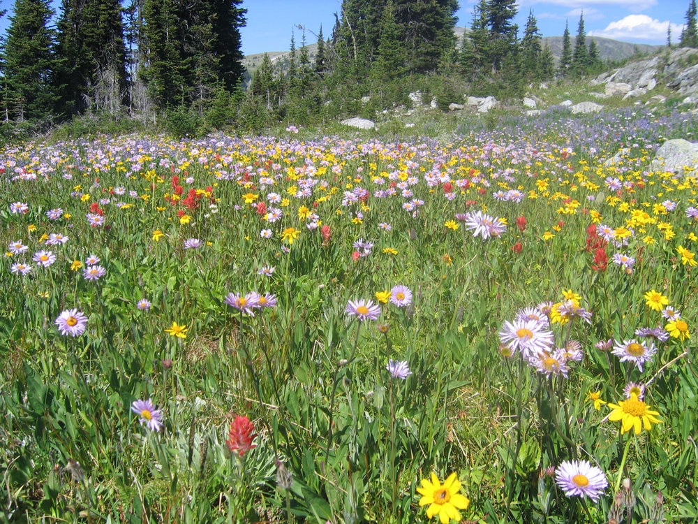 mountain-wildflowers-by-andrea-schafthuizen-public-domain.jpg