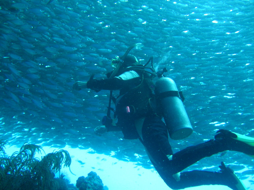 Diver with fish ball at Bonaire. Photo credit: Joanne and Don Reinhardt