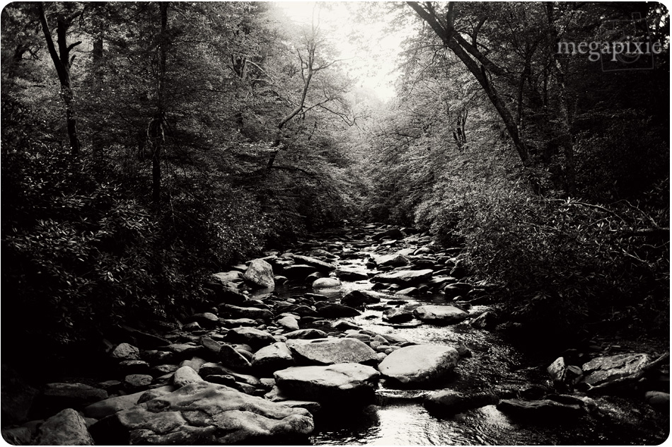 Smoky Mountains Photography 9