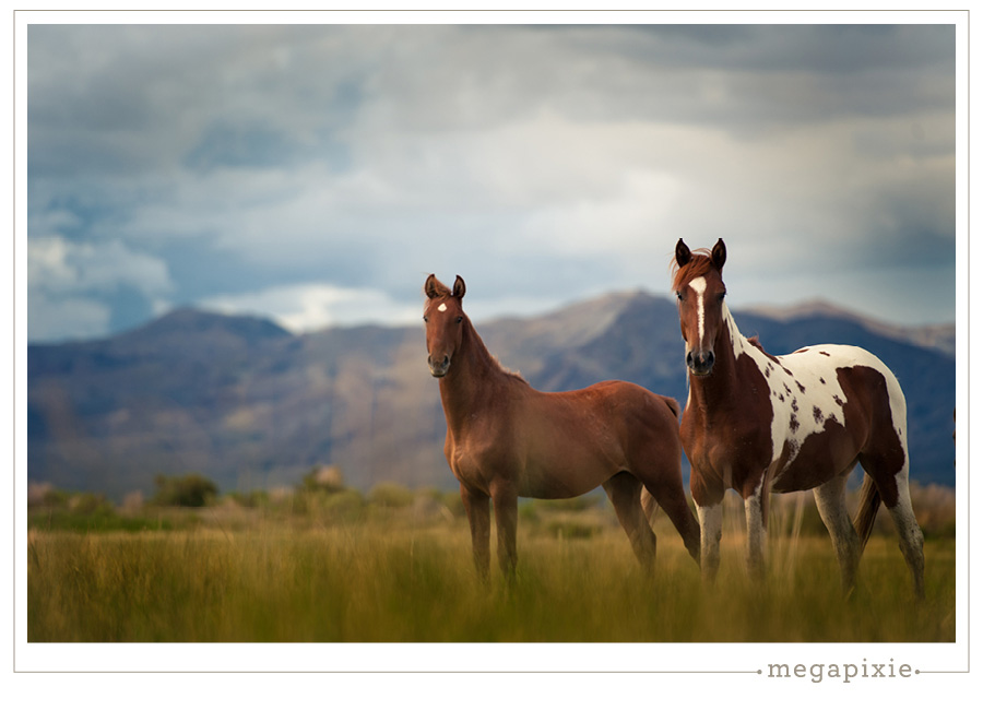 Black Rock Desert Horse Photographer