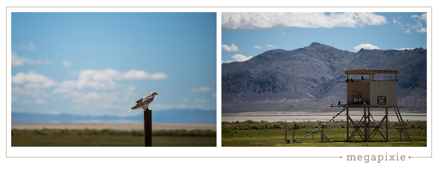 Black Rock Desert Falcon Photographer