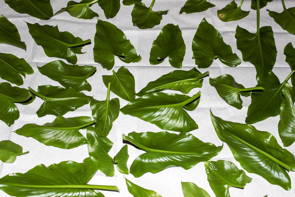 leaves-12.jpg