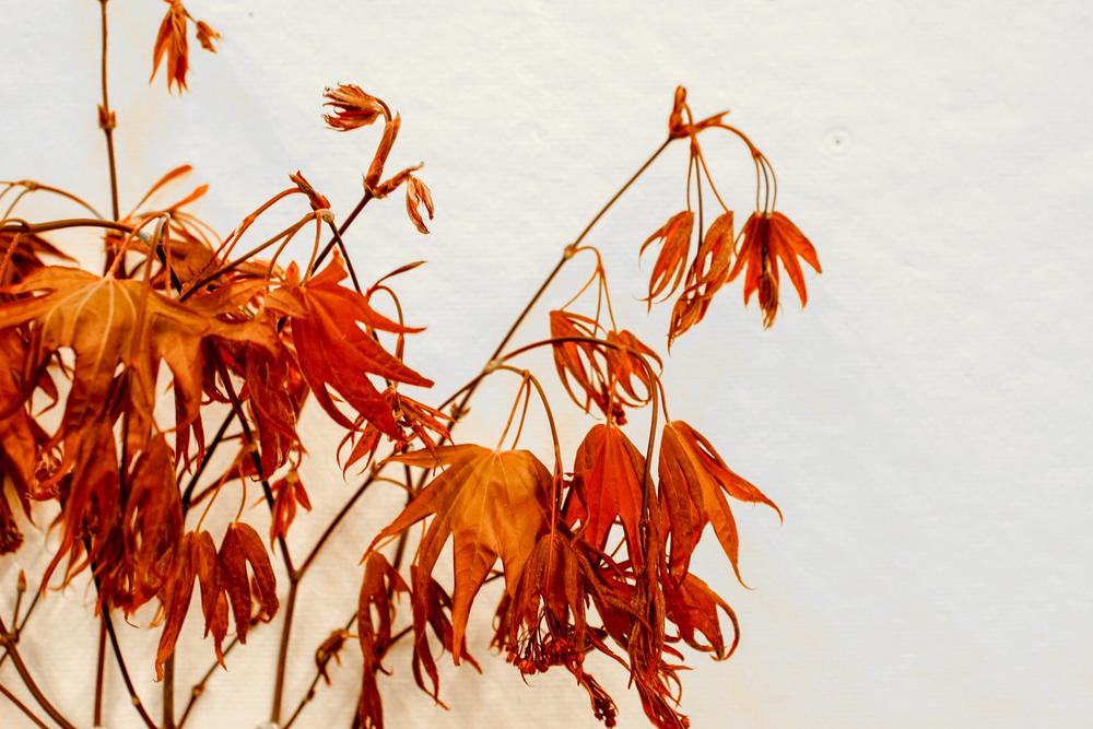 leaves-22.jpg