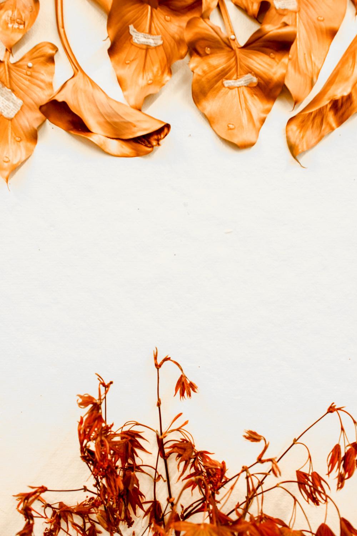leaves-23.jpg