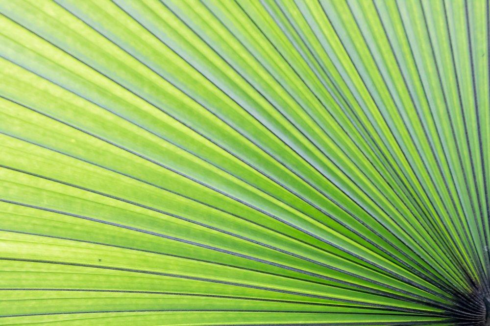 green-2903571_1920.jpg