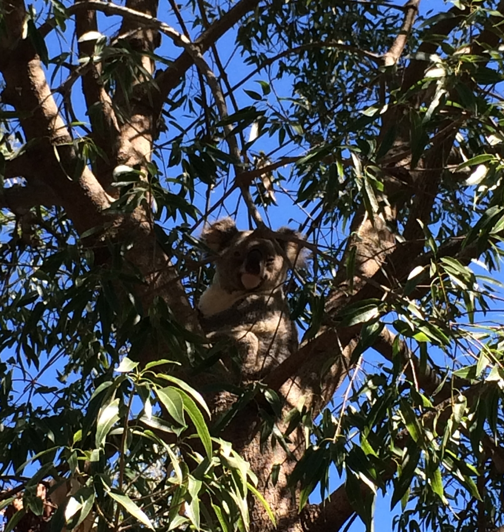 A resident at Rockhampton Zoo