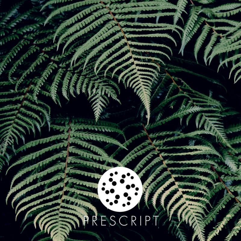 NZ Ferns.png