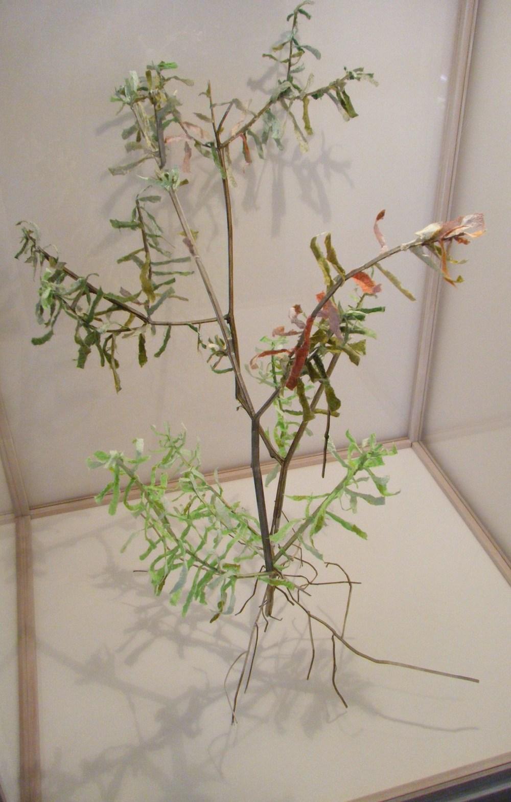 VOTR Banksia Spinulosa 1 view 2.jpg